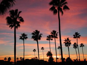 Buy RentalsAnaheim.com-Scenic view of palm tree silhouettes against a California sunset background