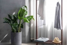 Home-decor-with-plant-and-clothes-rack